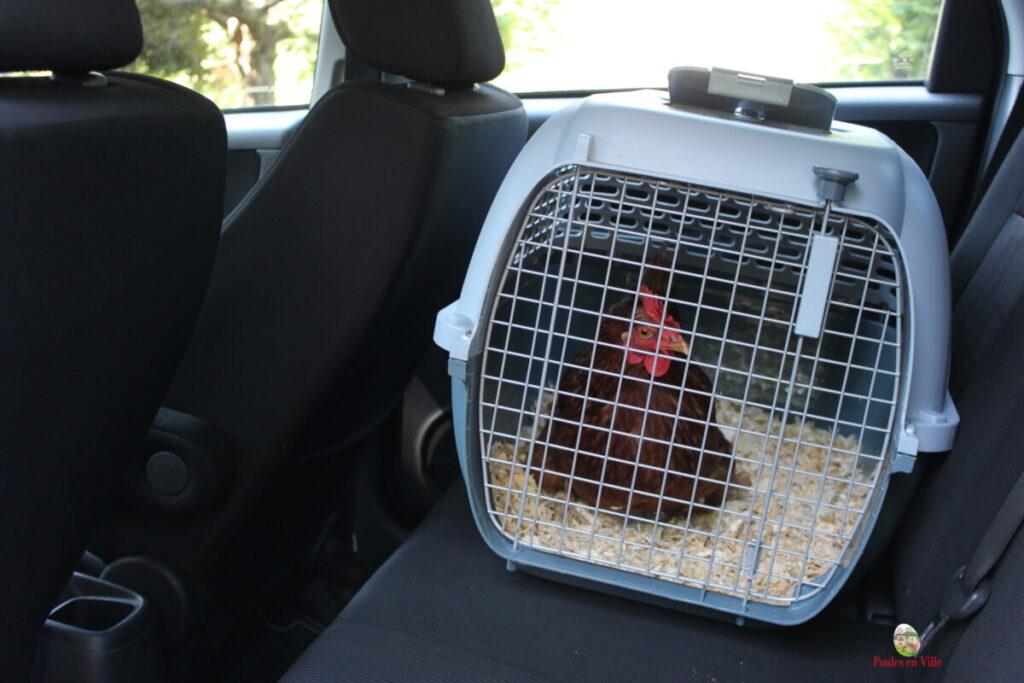 transport auto poule